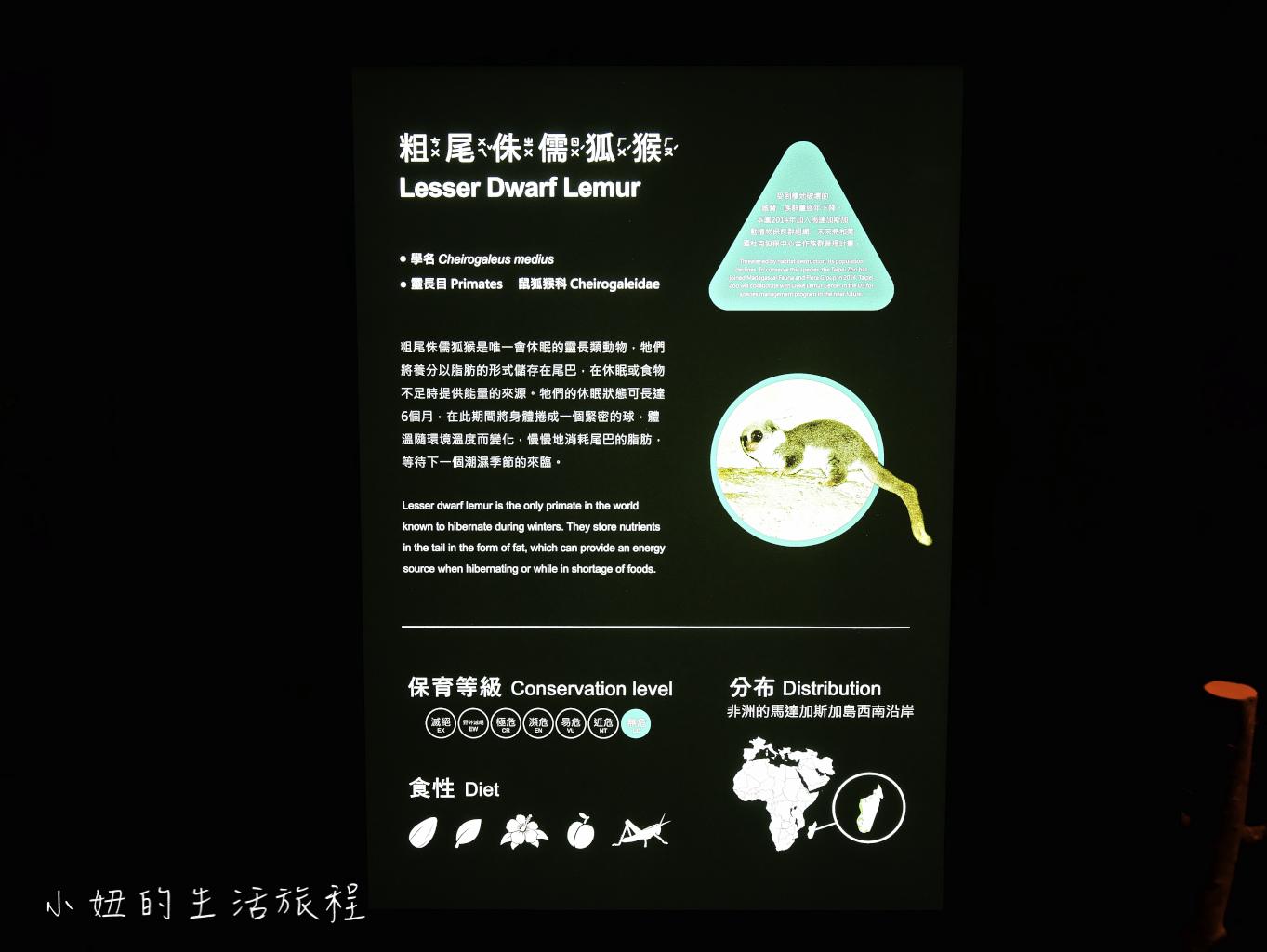 木柵動物園,穿山甲館,熱帶雨林館,2019-29.jpg