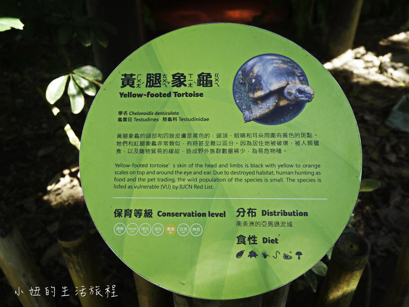 木柵動物園,穿山甲館,熱帶雨林館,2019-33.jpg