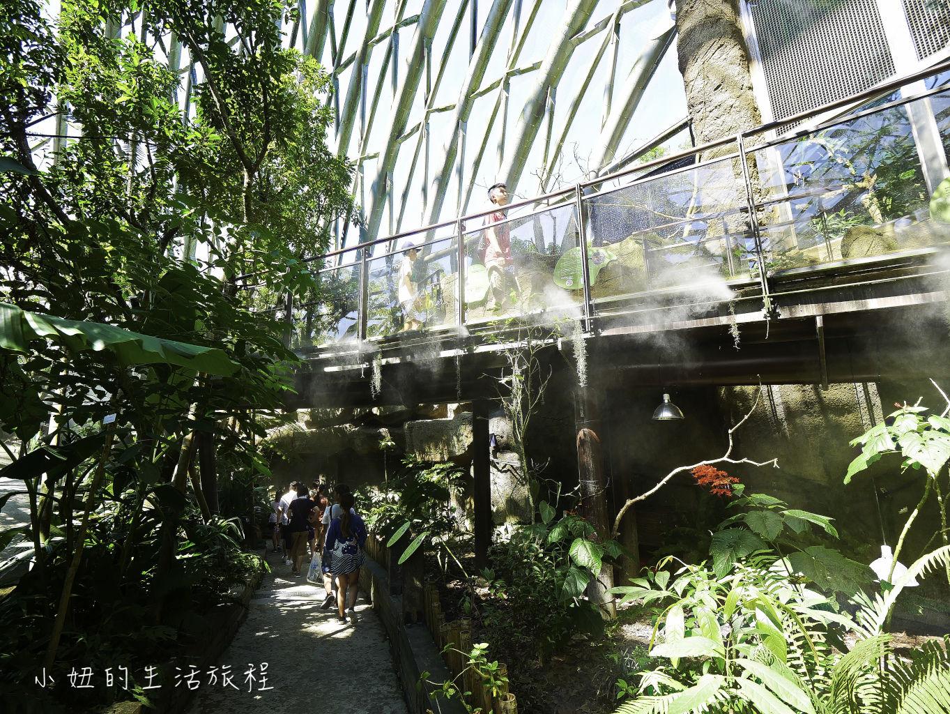 木柵動物園,穿山甲館,熱帶雨林館,2019-32.jpg