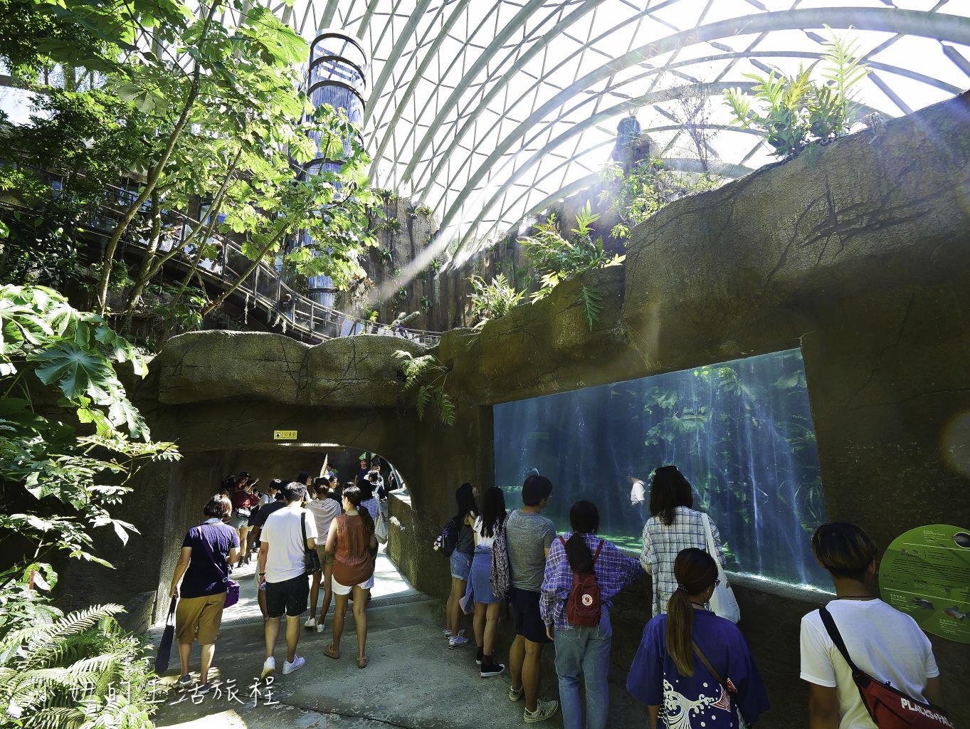木柵動物園,穿山甲館,熱帶雨林館,2019-35.jpg