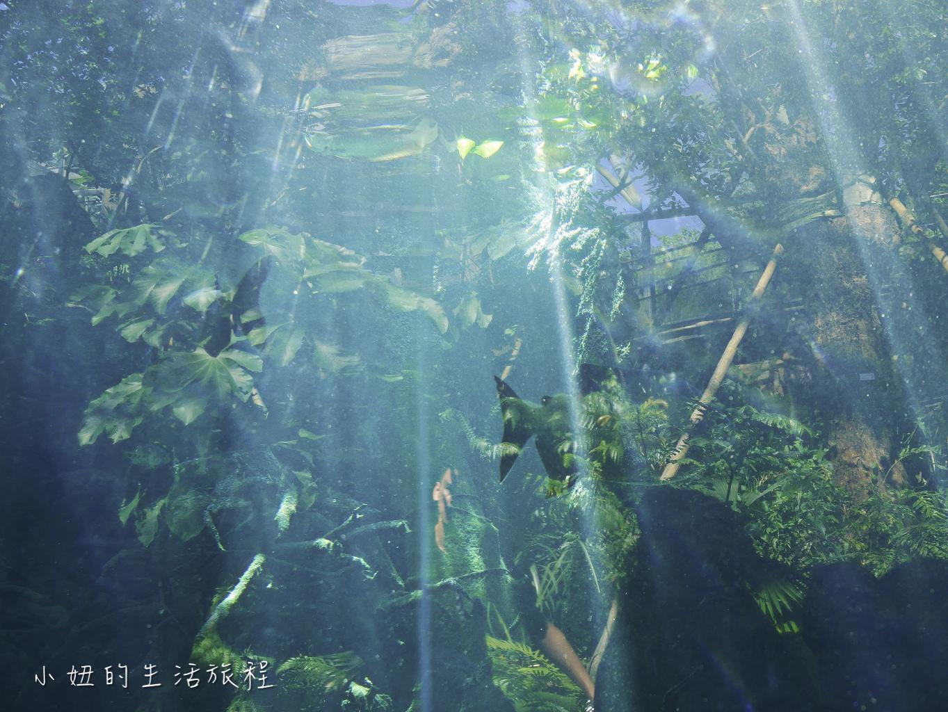 木柵動物園,穿山甲館,熱帶雨林館,2019-37.jpg