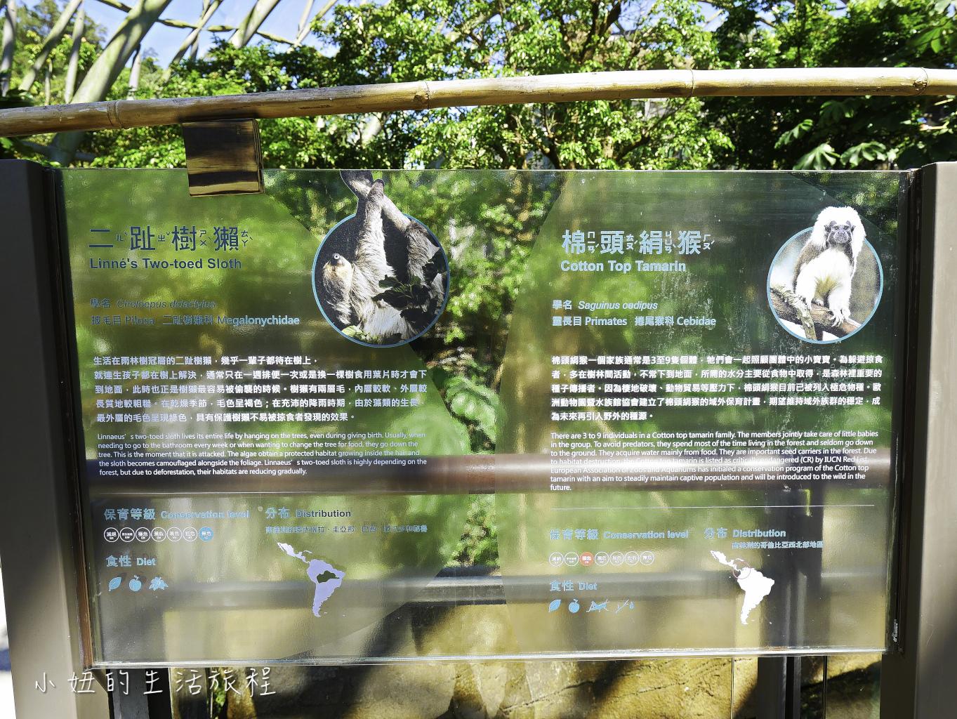 木柵動物園,穿山甲館,熱帶雨林館,2019-45.jpg