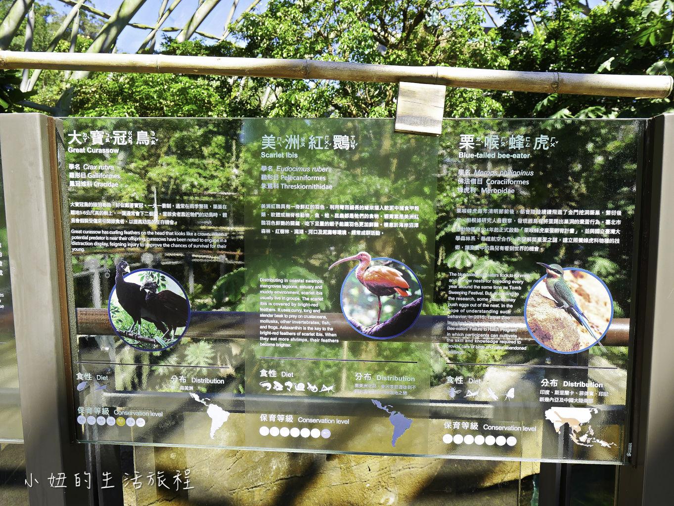 木柵動物園,穿山甲館,熱帶雨林館,2019-46.jpg