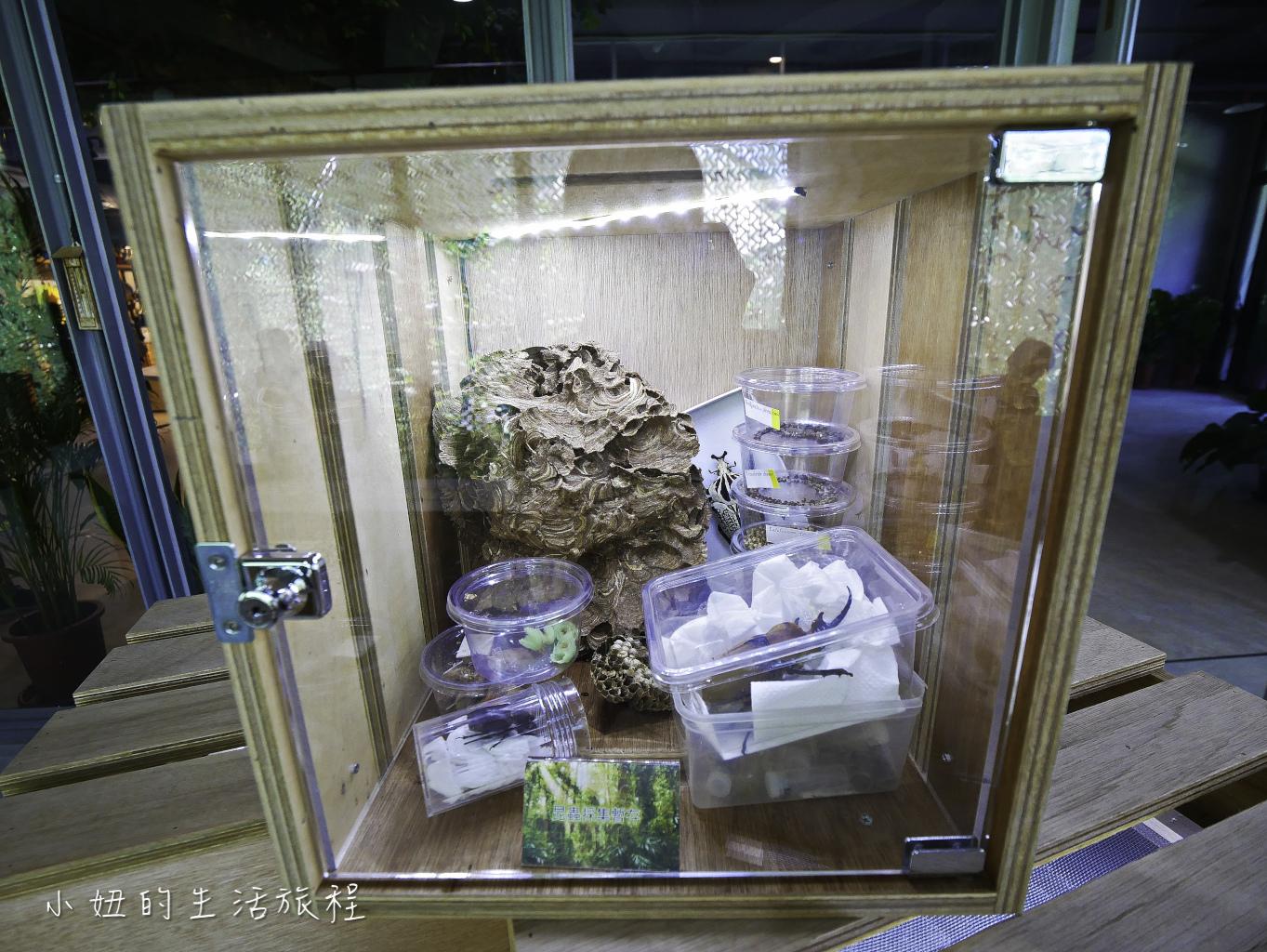 木柵動物園,穿山甲館,熱帶雨林館,2019-62.jpg