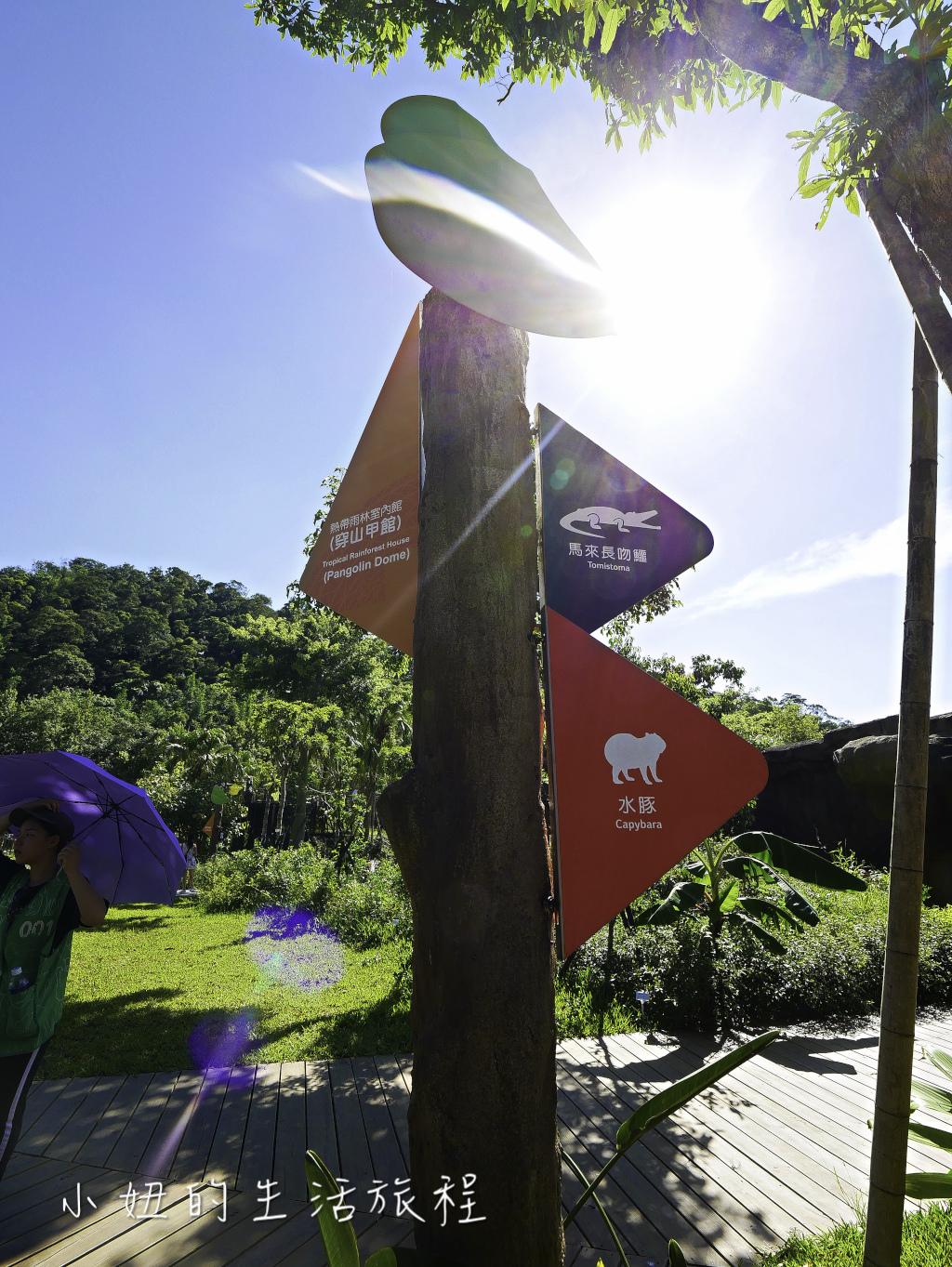 木柵動物園,穿山甲館,熱帶雨林館,2019-66.jpg
