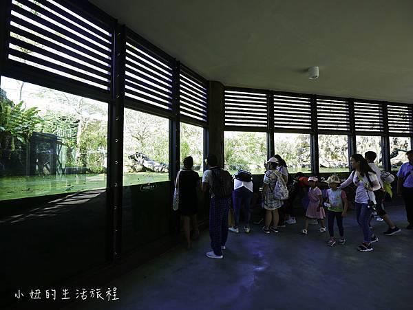 木柵動物園,穿山甲館,熱帶雨林館,2019-70.jpg
