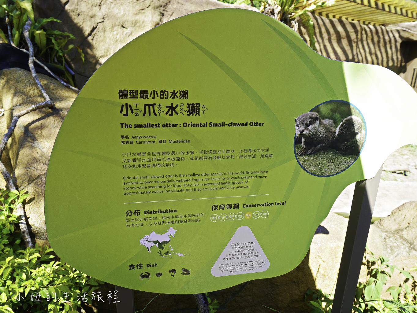 木柵動物園,穿山甲館,熱帶雨林館,2019-72.jpg