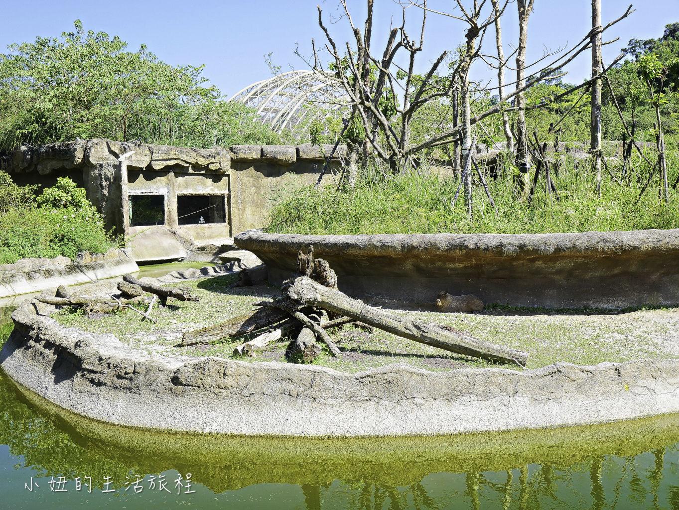 木柵動物園,穿山甲館,熱帶雨林館,2019-76.jpg