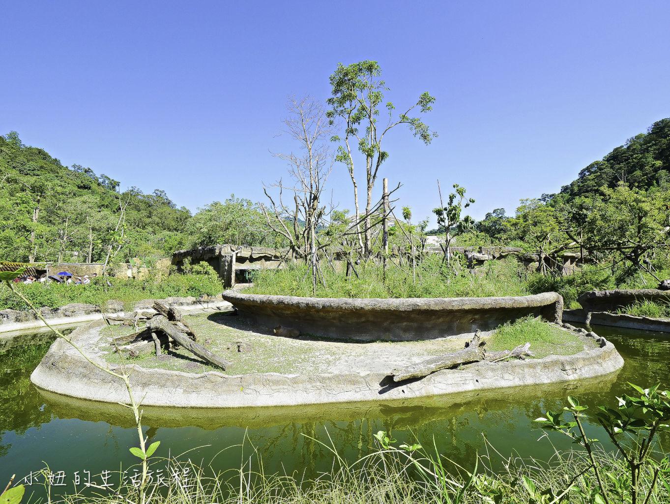 木柵動物園,穿山甲館,熱帶雨林館,2019-77.jpg