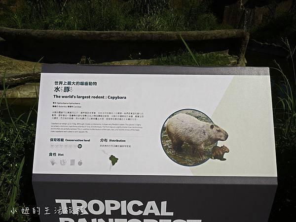 木柵動物園,穿山甲館,熱帶雨林館,2019-78.jpg