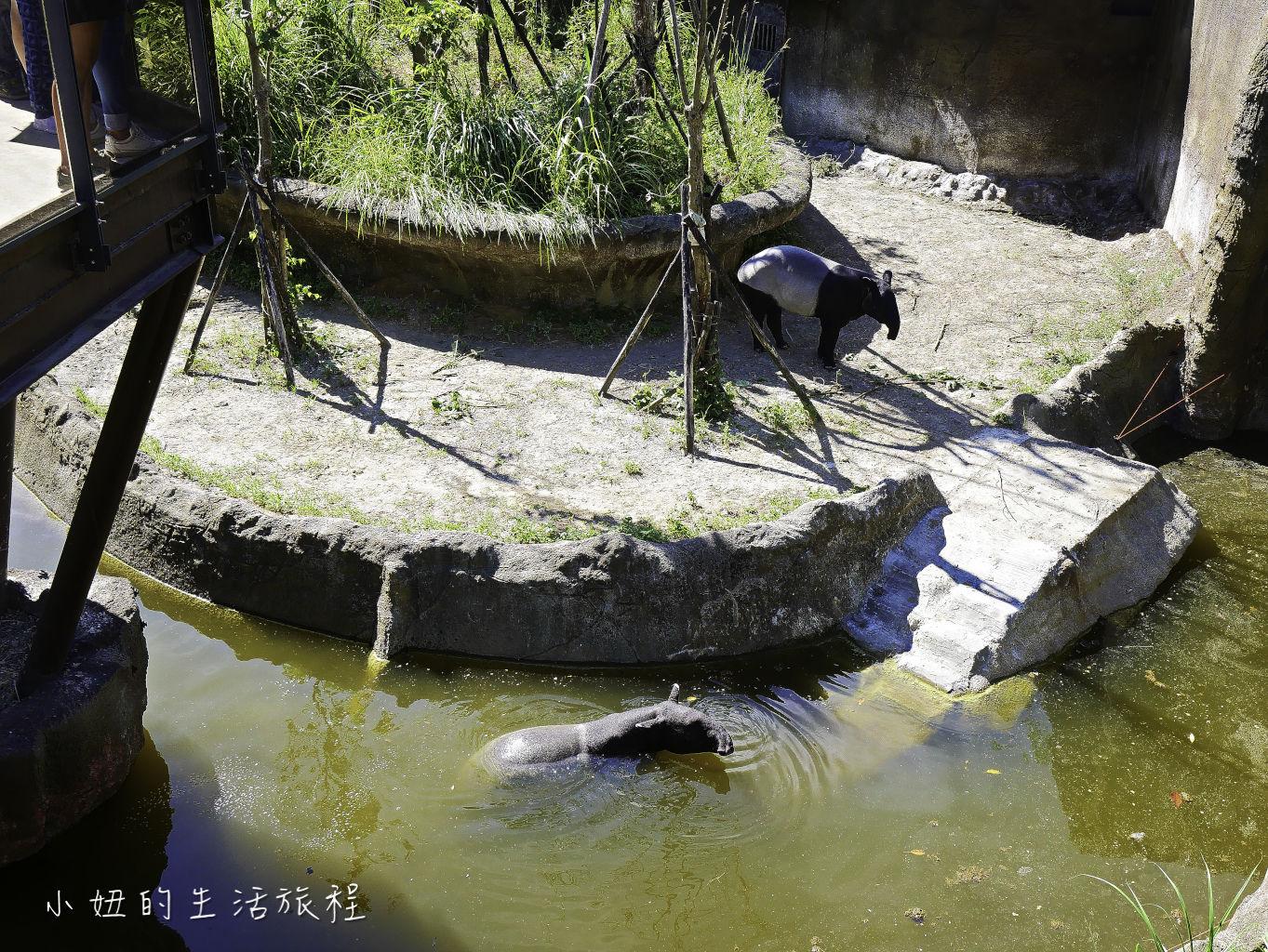 木柵動物園,穿山甲館,熱帶雨林館,2019-82.jpg
