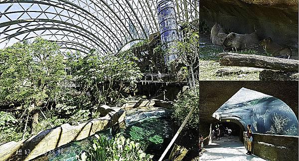 木柵動物園,穿山甲館,熱帶雨林館,2019-100.jpg