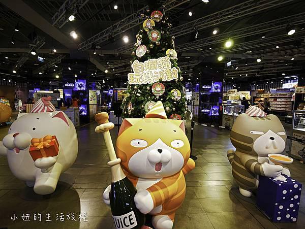 三創,白爛貓-4.jpg