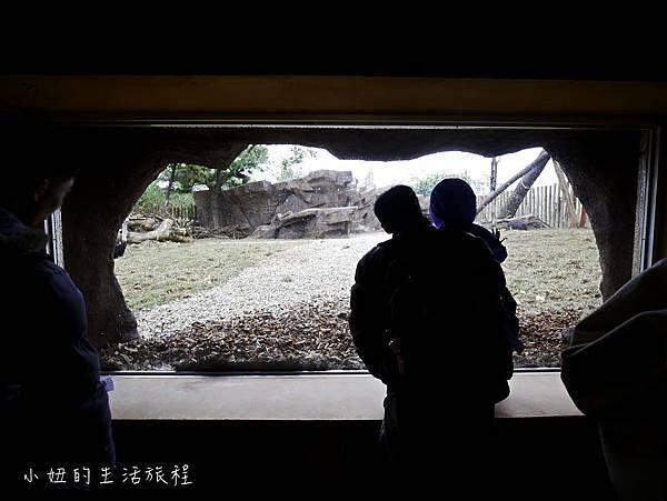 新竹動物園-13.jpg