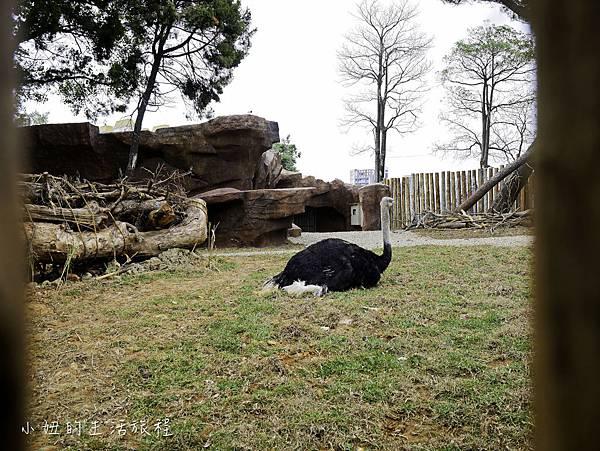 新竹動物園-14.jpg