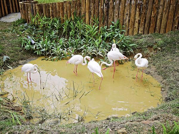 新竹動物園-19.jpg