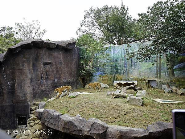 新竹動物園-21.jpg