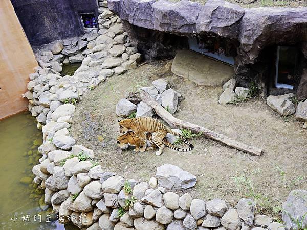 新竹動物園-22.jpg
