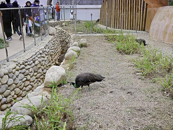 新竹動物園-40.jpg
