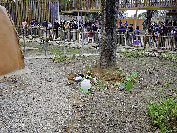 新竹動物園-39.jpg