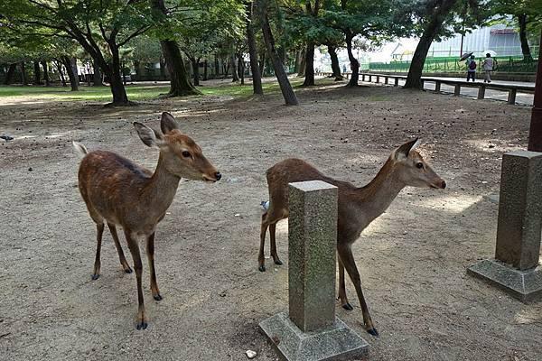12 奈良公園.jpg