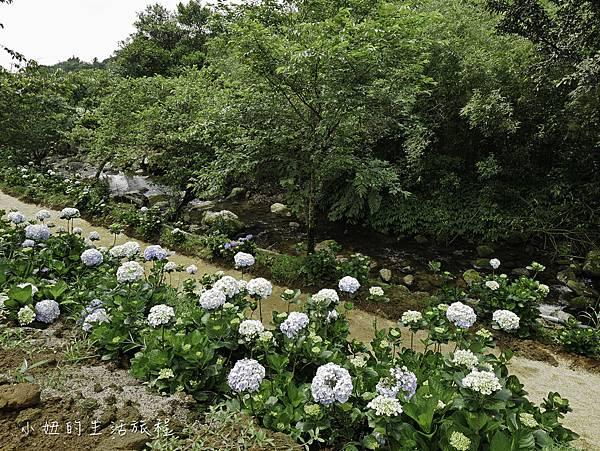 高家繡球花第三園區-16.jpg