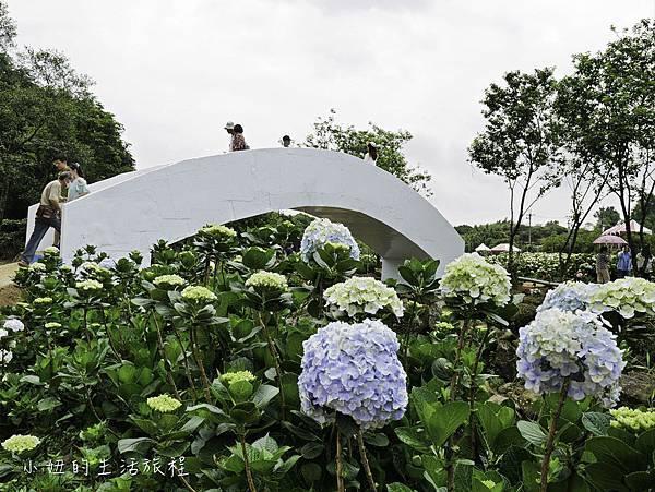高家繡球花第三園區-22.jpg