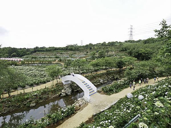 高家繡球花第三園區-19.jpg