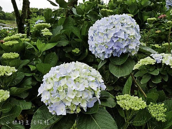高家繡球花第三園區-23.jpg