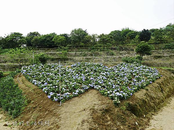高家繡球花第三園區-24.jpg
