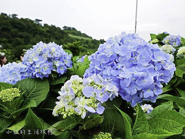 高家繡球花第三園區-28.jpg