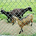 三重餵羊-1.jpg
