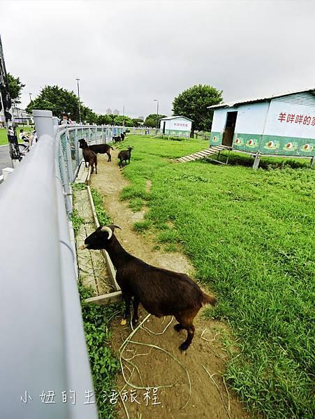 三重餵羊-9.jpg
