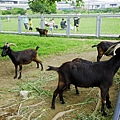 三重餵羊-16.jpg