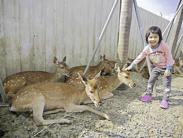 鹿境,墾丁餵鹿,梅花鹿-13.jpg