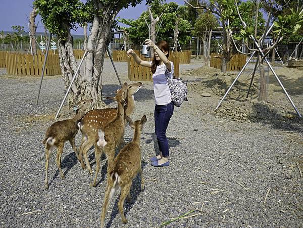 鹿境,墾丁餵鹿,梅花鹿-22.jpg