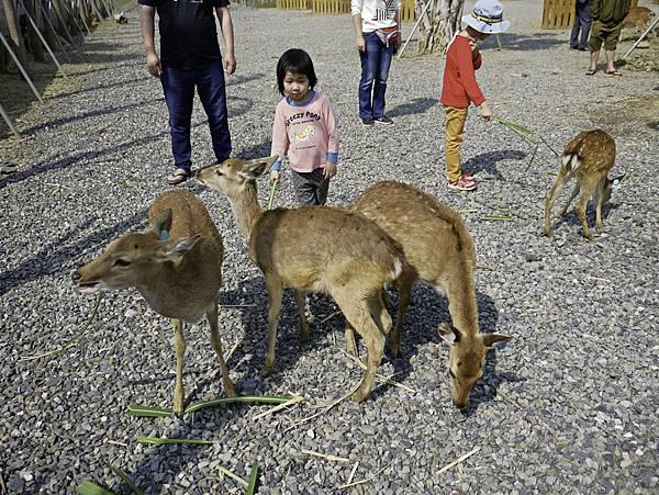 鹿境,墾丁餵鹿,梅花鹿-24.jpg