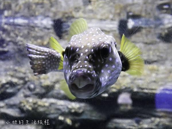 澎湖水族館-20.jpg