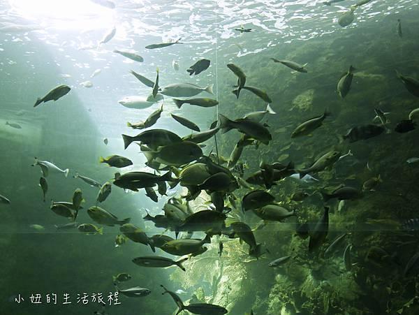 澎湖水族館-23.jpg