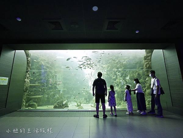 澎湖水族館-24.jpg