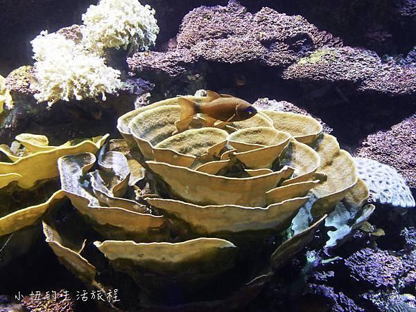 澎湖水族館-30.jpg