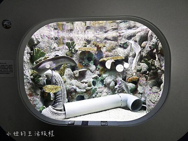 澎湖水族館-32.jpg