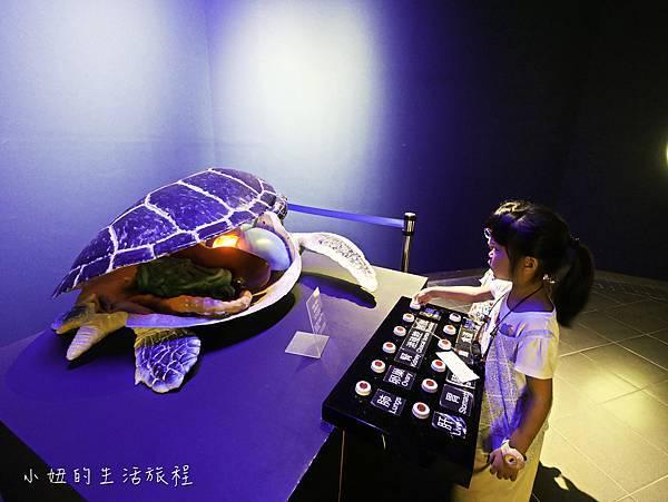 澎湖水族館-35.jpg