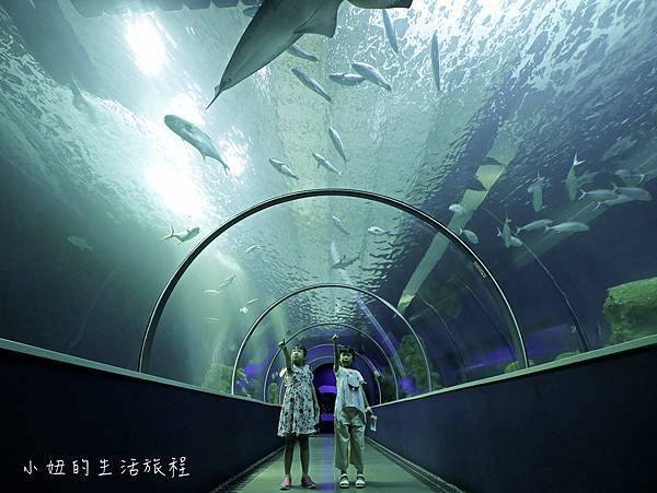 澎湖水族館-37.jpg