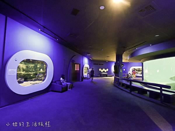 澎湖水族館-38.jpg