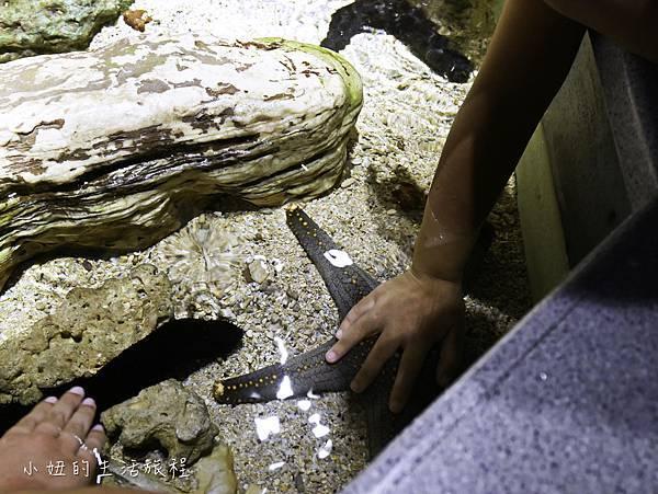 澎湖水族館-52.jpg