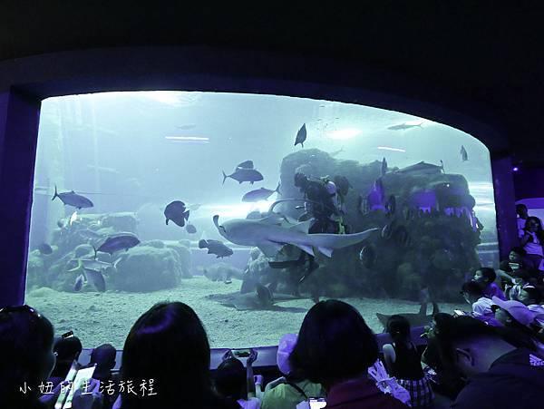 澎湖水族館-57.jpg