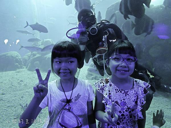 澎湖水族館-58.jpg