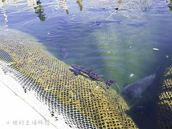 澎湖海洋牧場,鮮蚵吃到飽-29.jpg