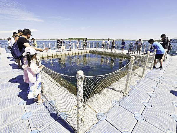 澎湖海洋牧場,鮮蚵吃到飽-30.jpg